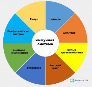 4Life Immunsystem kreidiagramm Russian