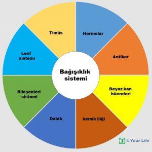 Immunsystem Kreisdiagramm türkisch